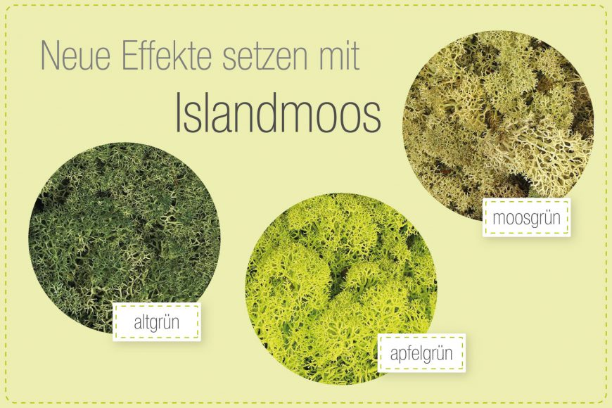Islandmoos – Vielseitiges Naturmaterial für Ihre DIY-Ideen